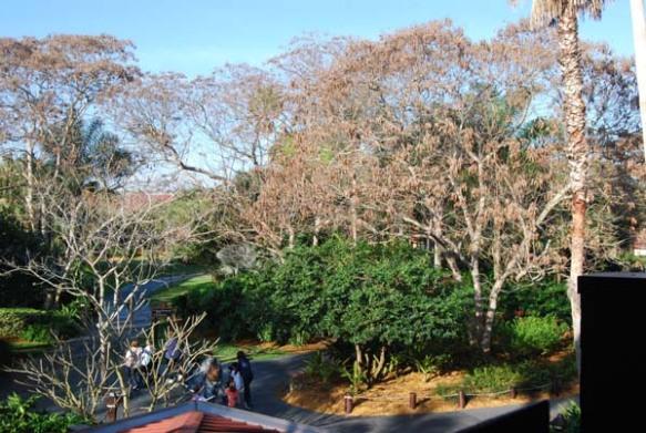 More lovely gardens...